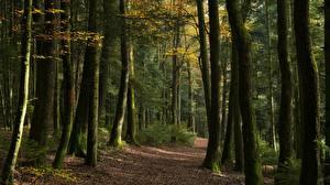 Bilder Wald Herbst Weg Bäume Natur