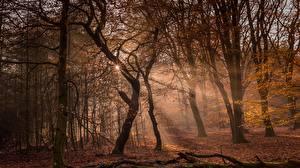 Hintergrundbilder Wald Herbst Bäume Lichtstrahl Natur