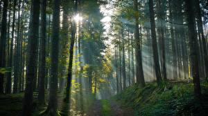 Hintergrundbilder Wald Bäume Nebel Lichtstrahl