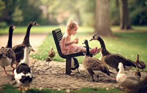 Fotos Gänse Vogel Kleine Mädchen Sitzt Bank (Möbel) kind