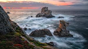 Fotos Meer Wasserwelle Küste Felsen Laubmoose Natur
