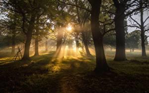 Hintergrundbilder Bäume Lichtstrahl Gras Natur