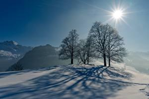 Bilder Winter Schnee Bäume Schatten Sonne Lichtstrahl Natur