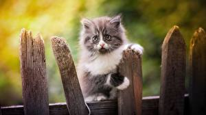 Hintergrundbilder Katze Kätzchen Zaun Blick ein Tier