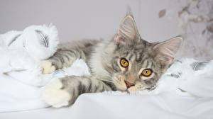 Cats Wallpaper 4k Images Pictures Download