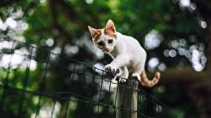 Hintergrundbilder Katzen Weiß Pfote Bokeh Zaun ein Tier