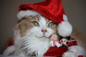 Fotos Neujahr Hauskatze Schnauze Mütze Starren Puppe ein Tier