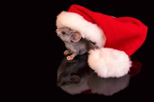 Fondos de escritorio Año Nuevo Ratones Fondo negro Sombrero del invierno Reflejado animales
