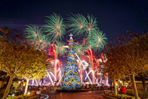 Photo New year USA Disneyland Park Fireworks California Design Trees New Year tree Nature