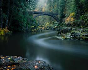 Bilder Wälder Fluss Brücke Parks USA Washington Lewis River, Yacolt, Moulton Falls Regional Park