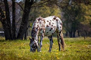 Tapety na pulpit Koń Trawa Rozmazane tło zwierzę