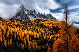 Bilder Berg Herbst Italien Bäume Dolomites Natur