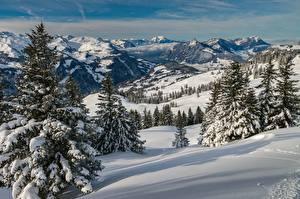 Bilder Gebirge Winter Schweiz Landschaftsfotografie Schnee Fichten Alpen Schwyz