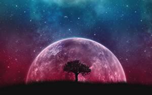 Fotos Planet Bäume Nacht Fantasy