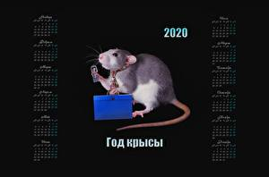Pictures Rats Black background 2020 Calendar Russian