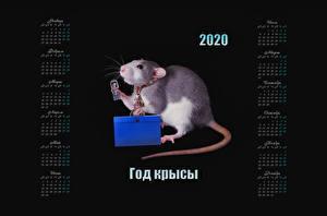 デスクトップの壁紙、、ラット、黒色背景、2020、暦、ロシアの、