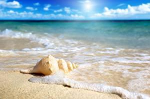 Hintergrundbilder Muscheln Meer Sand Schaum Unscharfer Hintergrund Natur