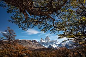 Fotos Himmel Berg Argentinien Bäume Ast Mount Fitz Roy, Patagonia