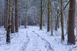 Hintergrundbilder Winter Wald Schnee Bäume
