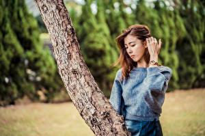 Bilder Asiaten Baumstamm Posiert Hand Unscharfer Hintergrund Sweatshirt Braune Haare junge frau