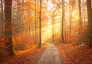 Hintergrundbilder Herbst Wald Bäume Weg Blatt Bank (Möbel) Lichtstrahl