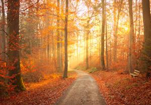 Hintergrundbilder Herbst Wald Bäume Weg Blatt Bank (Möbel) Lichtstrahl Natur
