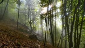 Fotos Herbst Lichtstrahl Nebel Blatt Bäume Natur