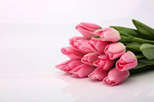 Bilder Blumensträuße Tulpen Rosa Farbe