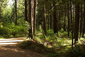Bilder Kanada Parks Wald Vancouver Bäume Weg Stanley Park