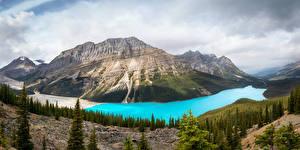 Bilder Kanada Park Gebirge See Wald Landschaftsfotografie Banff Fichten