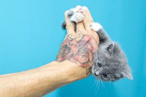 Photo Cat Hands Tattoos Colored background Kitty cat