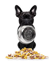 Wallpapers Dogs French Bulldog White background Bulldog Plate Black Bowl Animals