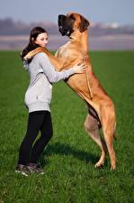 Bilder Hund Gras Deutsche Dogge Mädchens