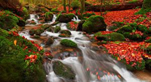 Bilder Deutschland Herbst Wasserfall Steine Blattwerk Laubmoose Rastatt