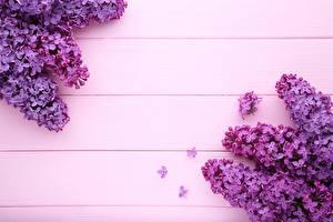 Bilder Flieder Violett Bretter Vorlage Grußkarte Blumen