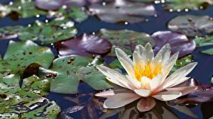 Fotos Lilien Blüte