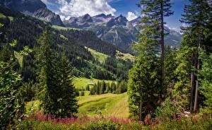 Fotos Gebirge Schweiz Landschaftsfotografie Bäume Alpen Gras Sanetschhore Natur
