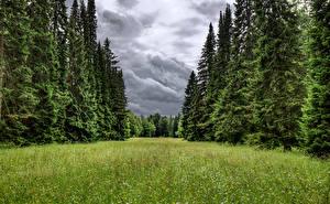Pictures Russia St. Petersburg Park Spruce Grass Lomonosov Oranienbaum park Nature