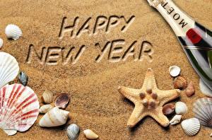 Bilder Muscheln Neujahr Sand Kleine Sterne Englischer Text
