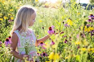 Hintergrundbilder Sommer Kleine Mädchen Blondine kind Blumen