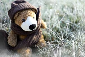 Pictures Teddy bear Toy Sit Winter hat Scarf Grass