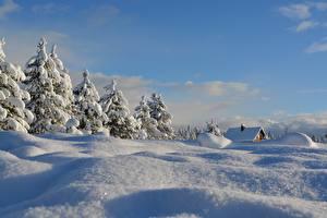 Photo Winter Snow Spruce Nature