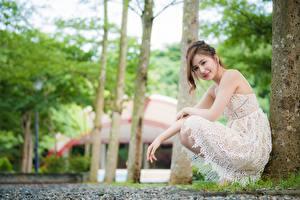 Fotos Asiaten Unscharfer Hintergrund Posiert Sitzt Kleid Braune Haare Starren junge frau