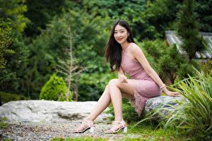 Bilder Asiaten Sitzt Bein Kleid Lächeln Haar Starren junge frau