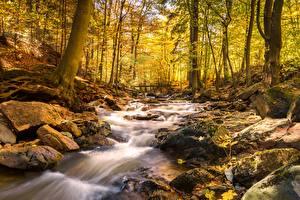 Pictures Autumn Stone Bridge Forest Streams Moss Nature