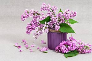 Hintergrundbilder Sträuße Syringa Vase Blütenblätter