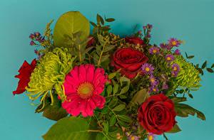 Hintergrundbilder Sträuße Rose Gerbera Astern Farbigen hintergrund Blüte