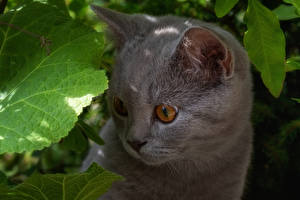 Image Cat Kitty cat Snout Gray Staring animal