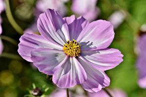 Fotos Hautnah Schmuckkörbchen Unscharfer Hintergrund Rosa Farbe Blüte