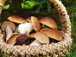 Image Closeup Mushrooms nature Many Porcino Wicker basket Nature